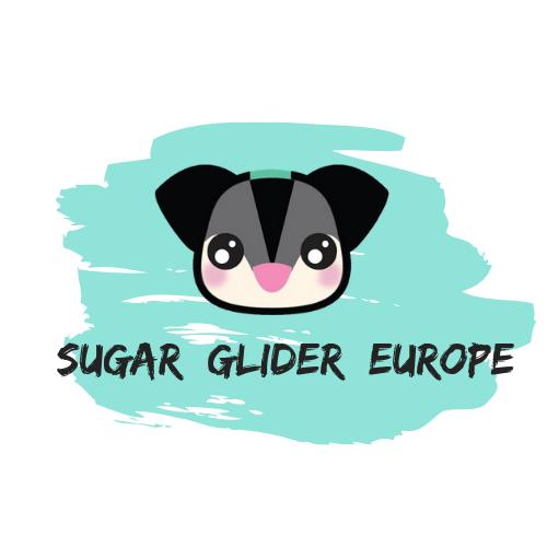 Sugar Glider Europe