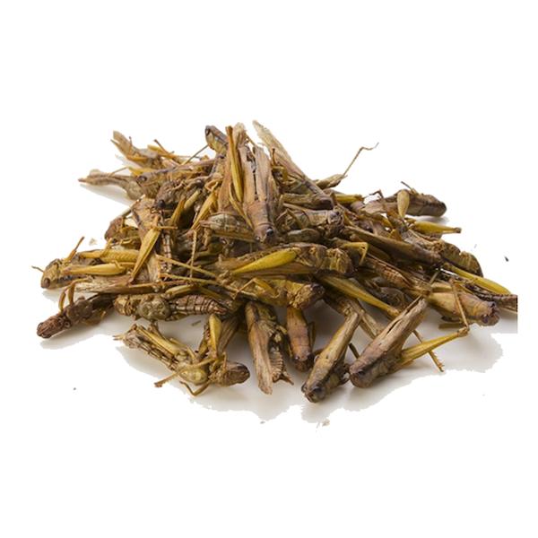 saltamontes deshidratados para petauros del azucar insectos de petauro del azucar sugar glider tienda online